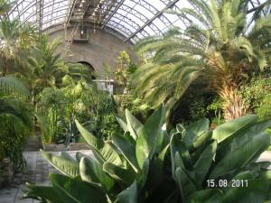 путешествие по санкт-петербургу. оранжерея таврического сада
