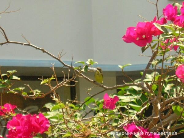 tailand-samui-nash-otel