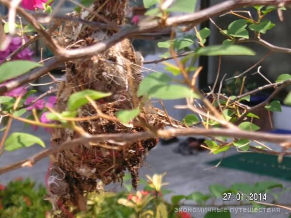 гнездо птички