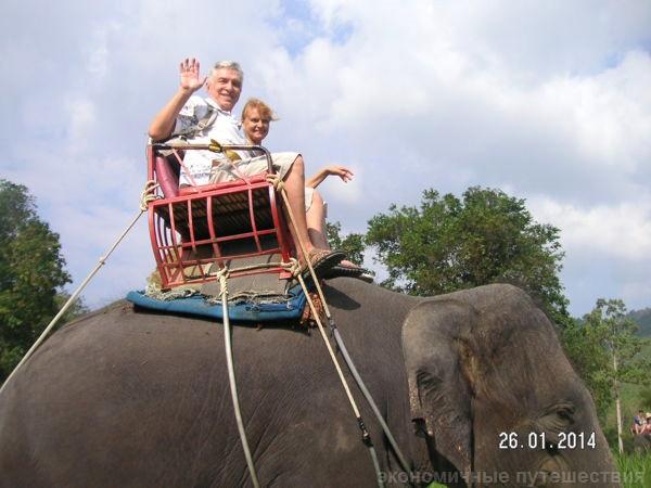 фото слона с земли