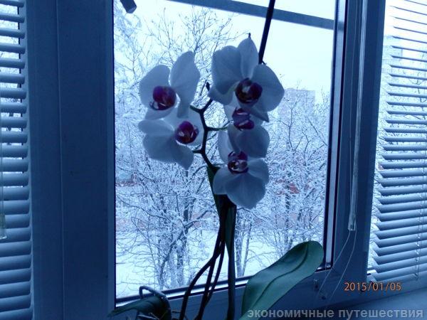 munhen-botanicheskiy-sad